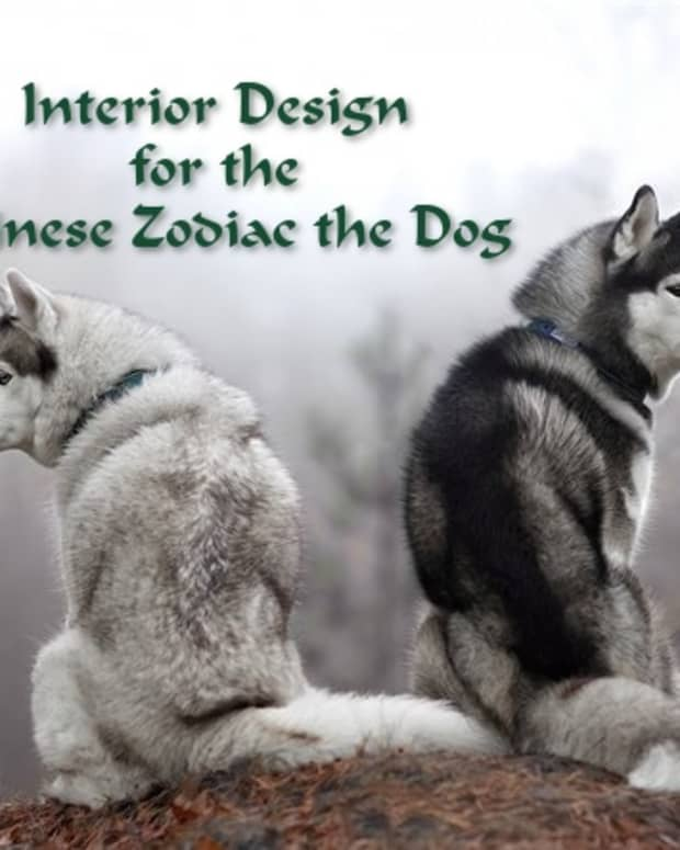 how-to-decorate-every-room-in-your-home-like-the-chinese-zodiac-the-dog