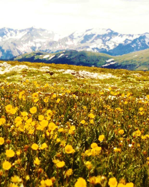 colorado-vacation-and-rocky-mountain-photography-on-trail-ridge