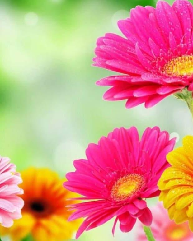 newness-aspiration-and-renewal-spring-to-the-poetess-brenda-arledge