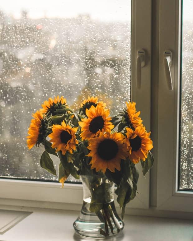 beyond-the-windowpane