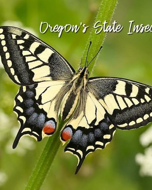 俄勒冈州昆虫