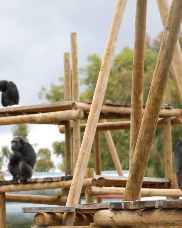 volunteering-at-rainfer-primate-rescue-centre-madrid