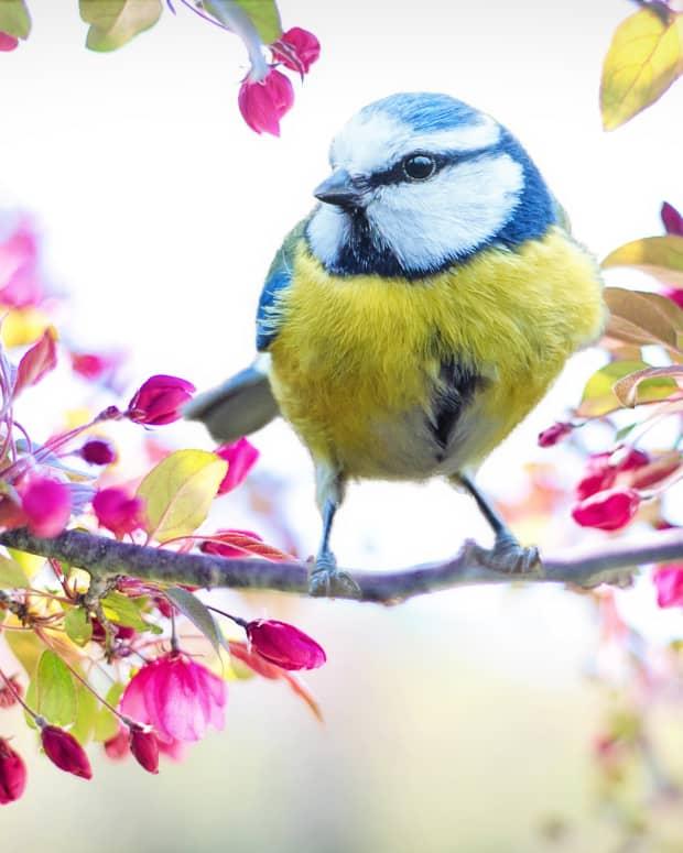 spring-melody