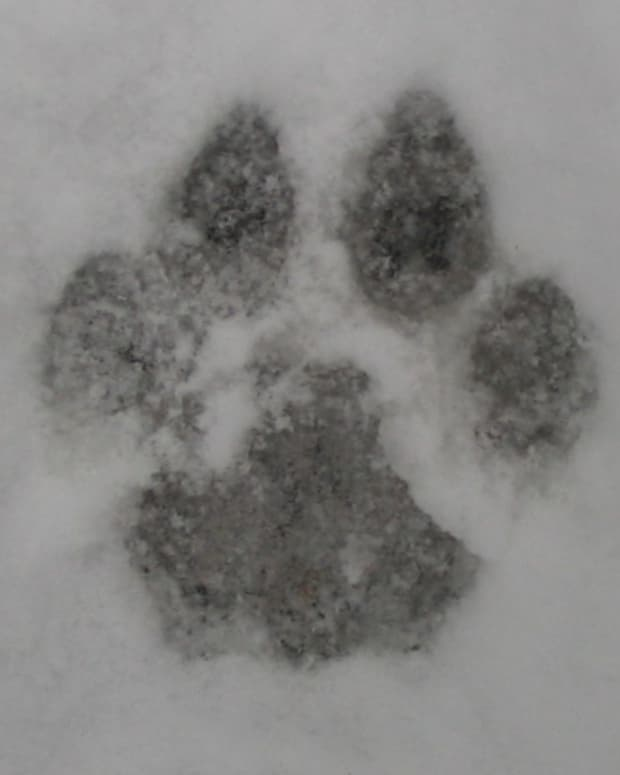 animal_tracks