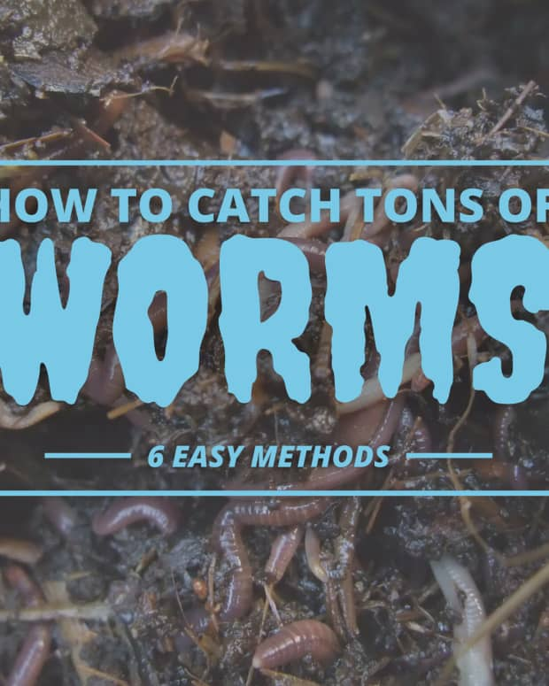 ways-to-get-earthworms-to-come-out-of-the-ground