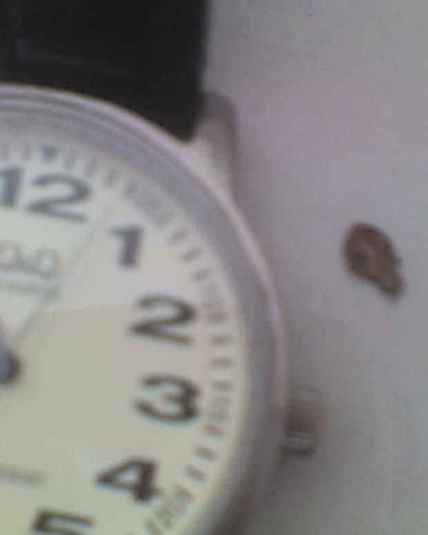 Barney Bug plans his next meal time
