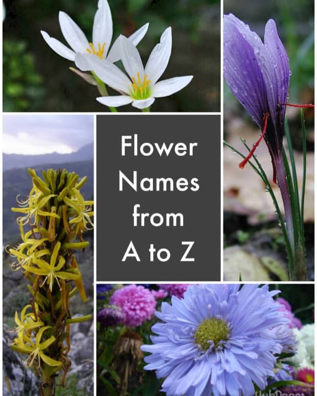list-of-flower-names