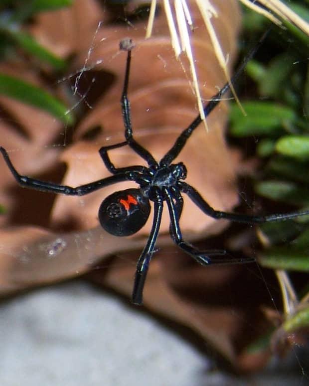 spider-information