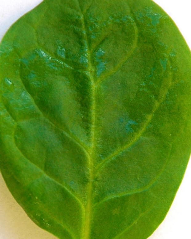 Spinach is an excellent source of magnesium. Photo by Gaetan Lee.