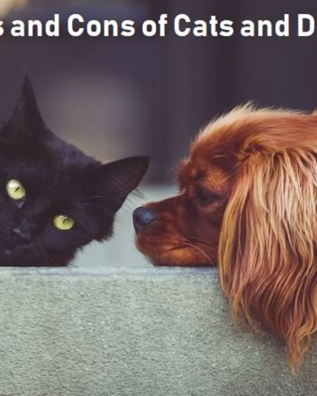 pros-and-cons-of-cats-and-dogs
