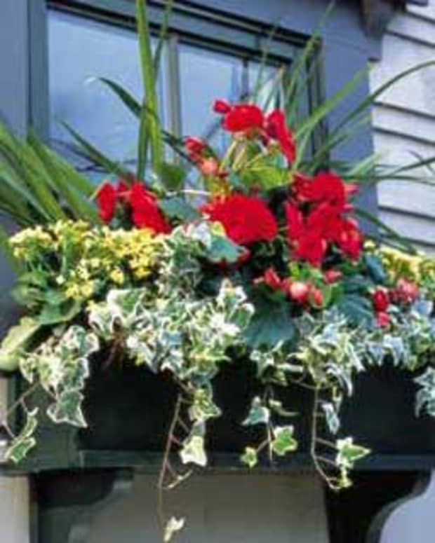 add-some-window-boxes-for-impact-and-charm