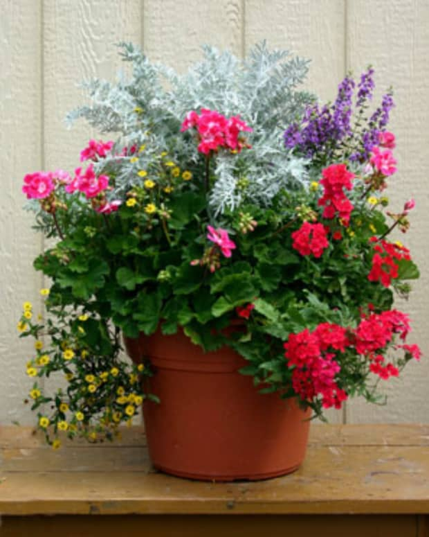httpwwwoutdoorcontainergardeningplantingabeautifulpotofflowerscom