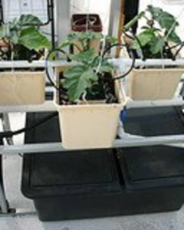 all-you-need-to-know-about-hydroponics