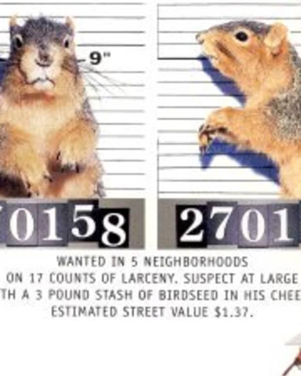 Squirrels - Public Enemy No. 1?