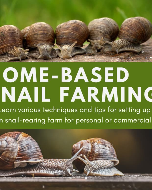 home-based-snail-farming