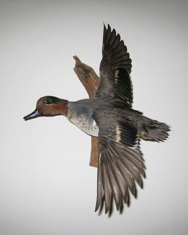 duck-hunting-texas-public-lands-faqs