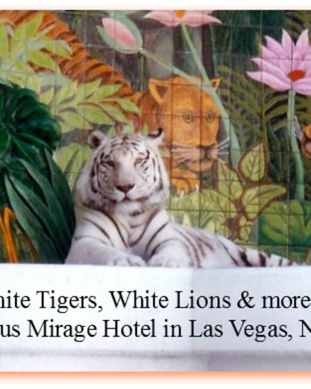las-vegas-nevada-tiger-lions-secret-garden-mirage