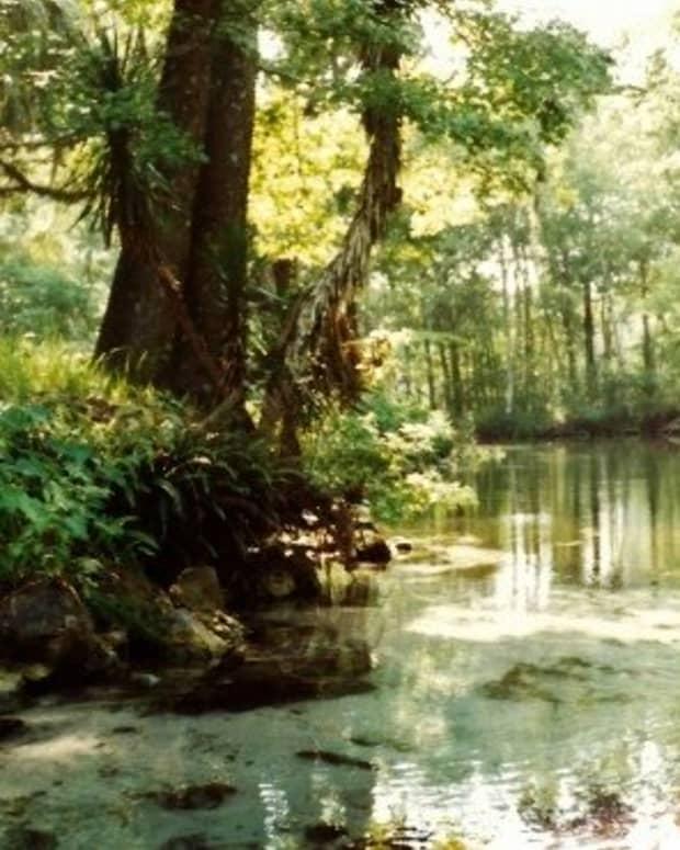 florida-silver-springs-attractions-tarzan-more