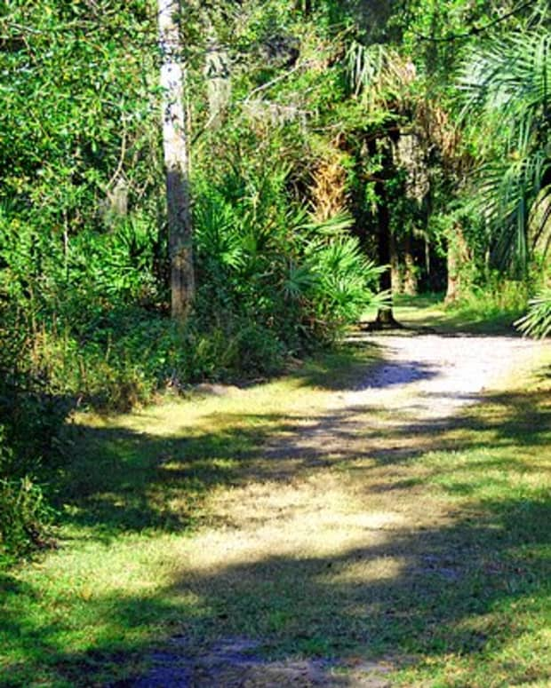 A part of the Nature Trail