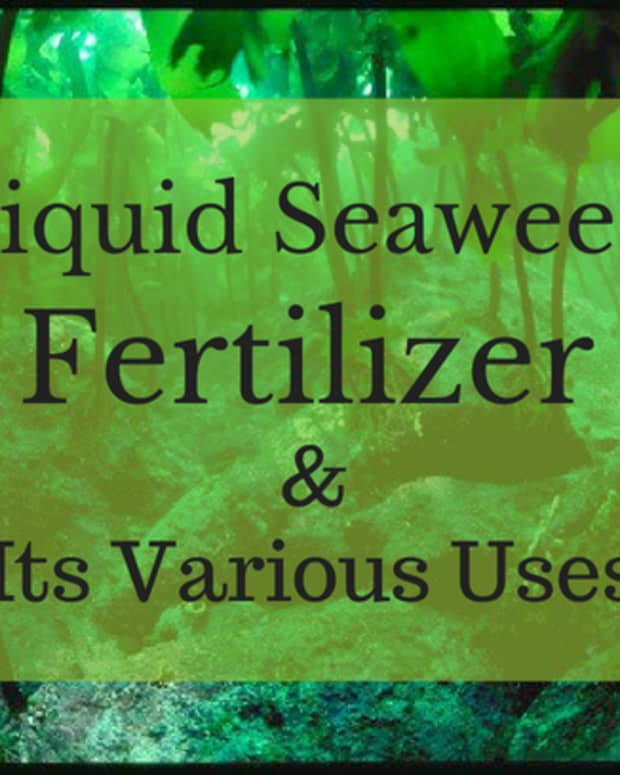 the-benefits-of-using-liquid-seaweed-fertilizer