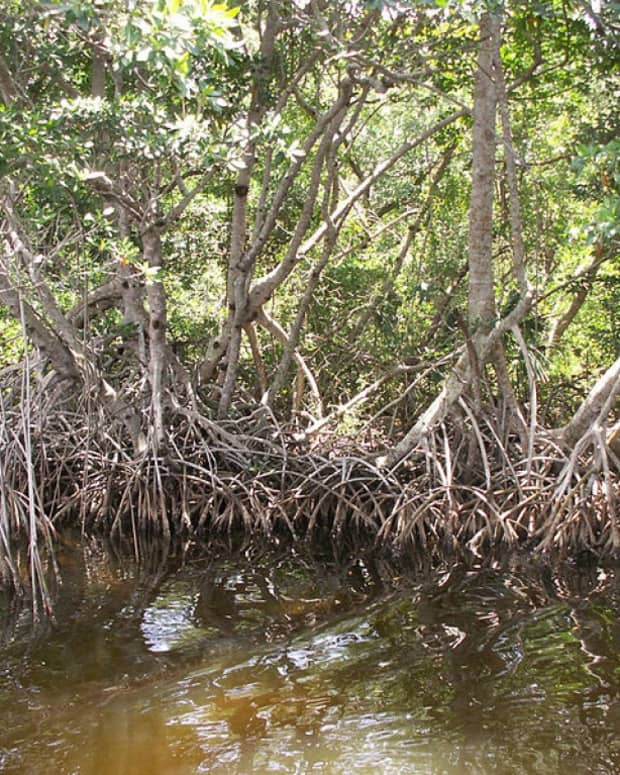 bigfoot-in-florida-skunk-ape-sightings