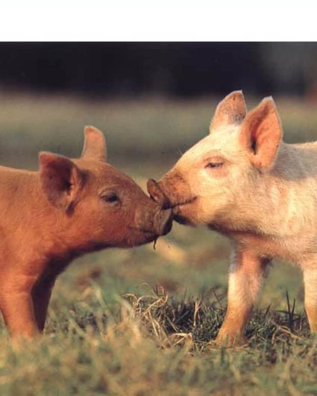 dangers-of-meat-consumption