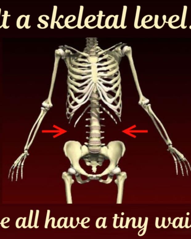 find-your-waistline