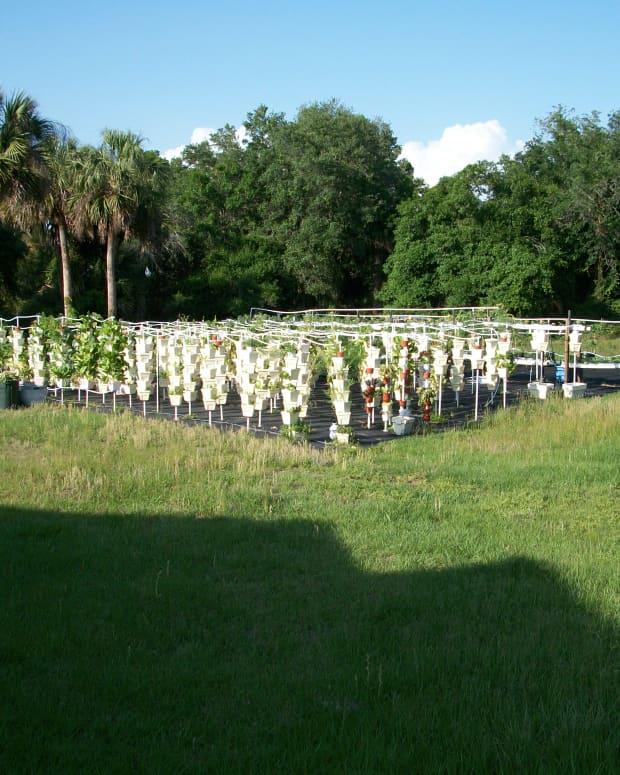visit-kevin-newells-hydroponic-organic-vegetable-farm