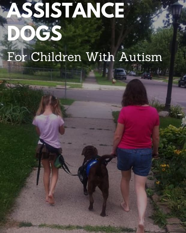 assistance-dogs-for-families-of-children-with-autism-aspergers-syndrome