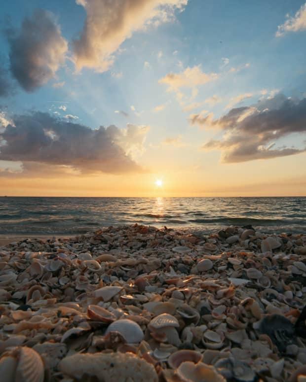 a-mere-seashell