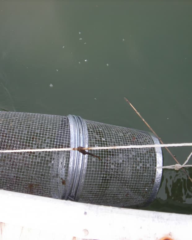 how-to-set-up-and-put-minnow-catcher-trap-in-water
