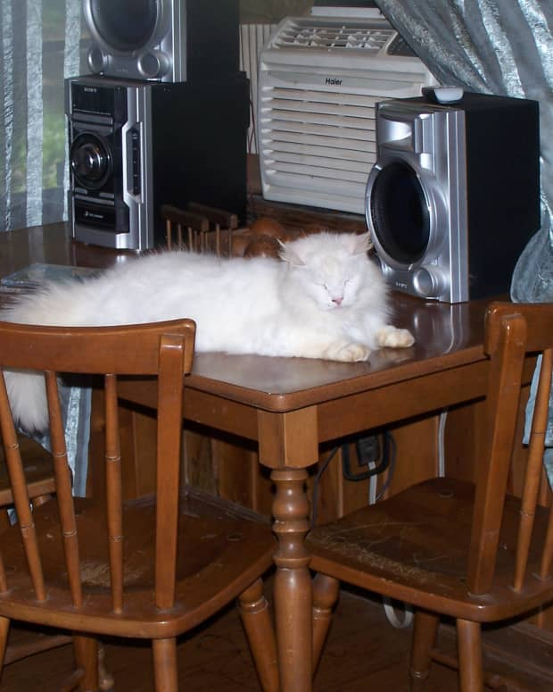 catshow-to-tell-a-cat-no-and-get-it-to-listen