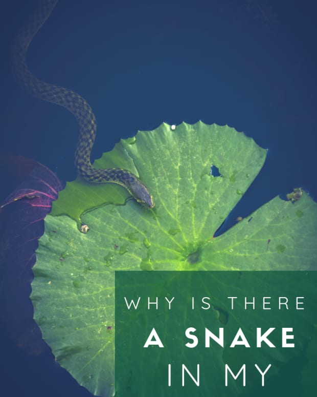 snakes-in-a-dream-the-meaning-of-dreams-about-snakes