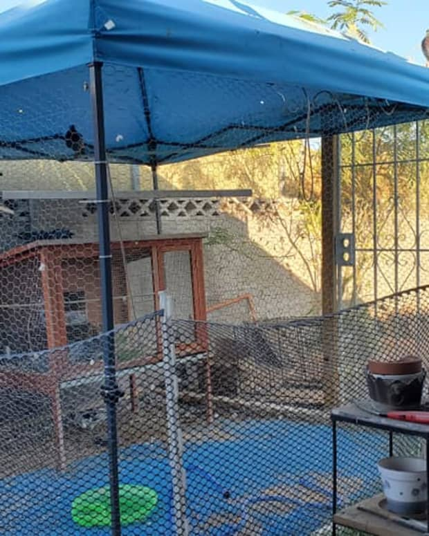 how-to-build-a-backyard-aviary