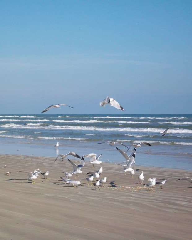 chasing-seagullsbarking-at-the-air