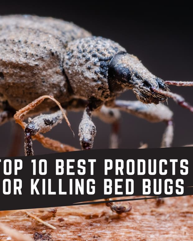 get-rid-of-bed-bugs-here-are-top-10-products-for-killing-bed-bugs