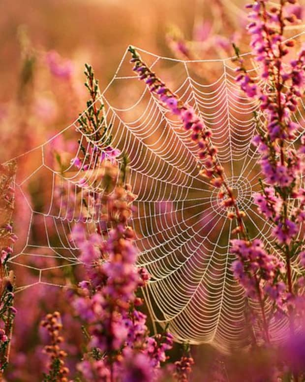 caught-in-a-web