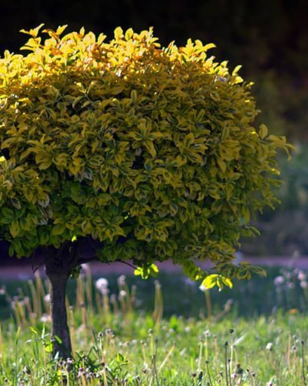 top-5-trees-for-small-gardens