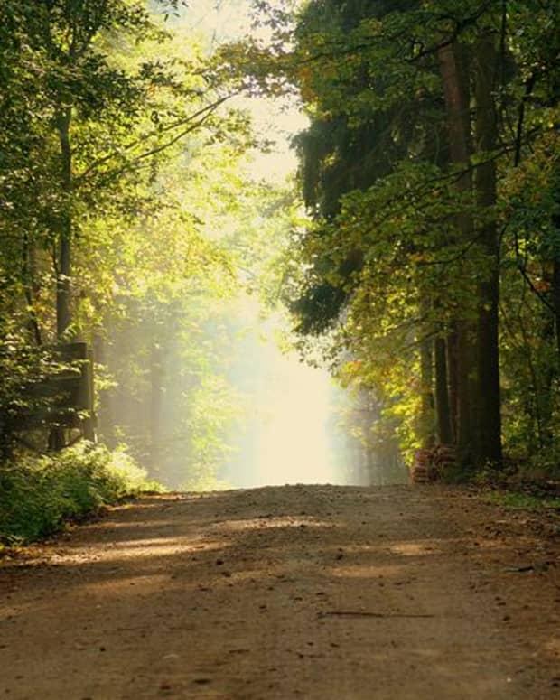 7-suprising-benefits-of-morning-walk