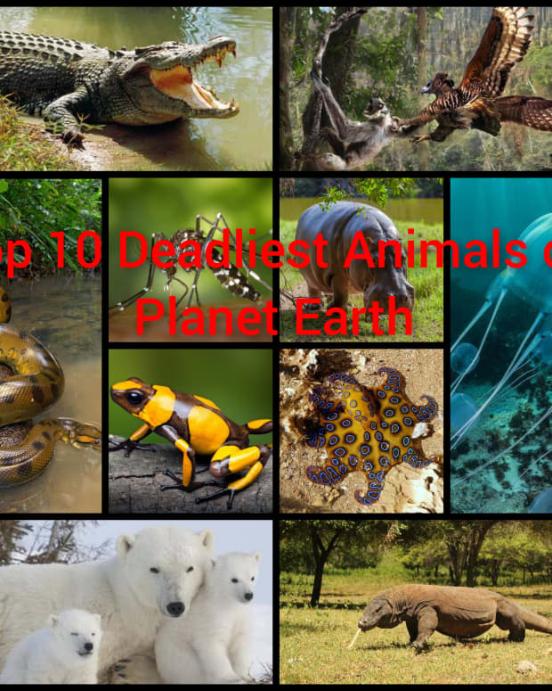 top-10-deadliest-animals-on-planet-earth