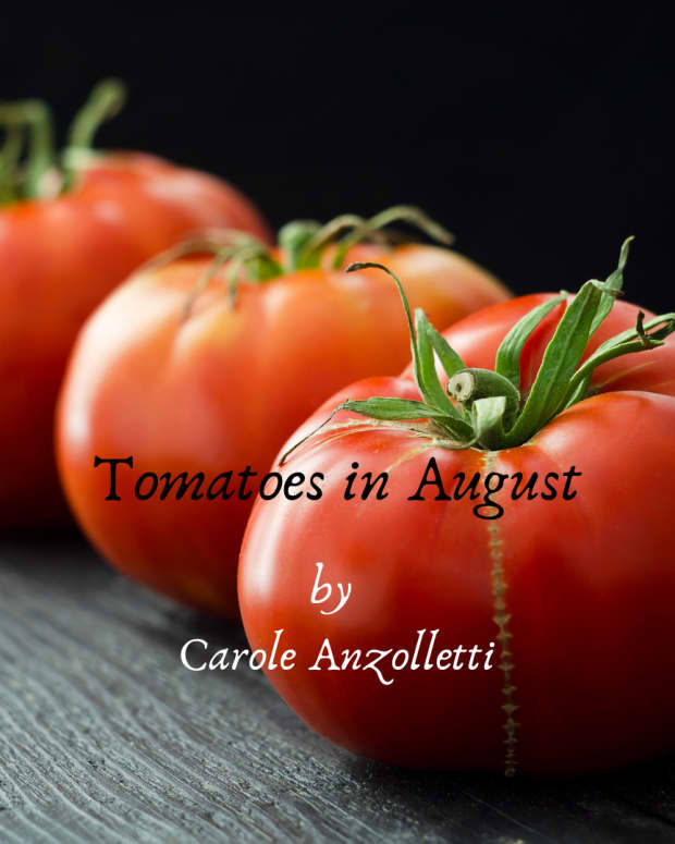 tomatoes-in-august