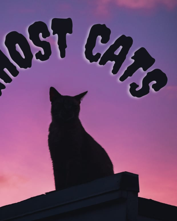 the-feline-persuasion-true-tales-of-ghost-cats