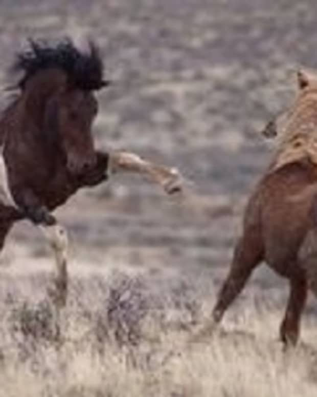 to-run-along-with-horses
