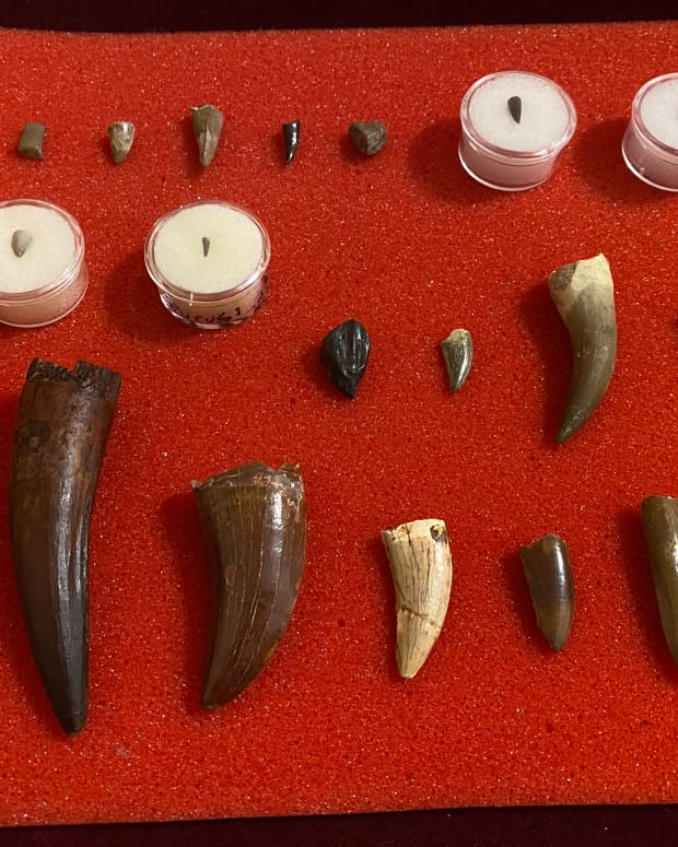 a-guide-to-affordable-fossil-collecting
