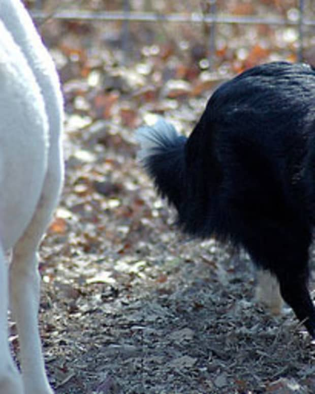 country-dog-names-that-start-with-b