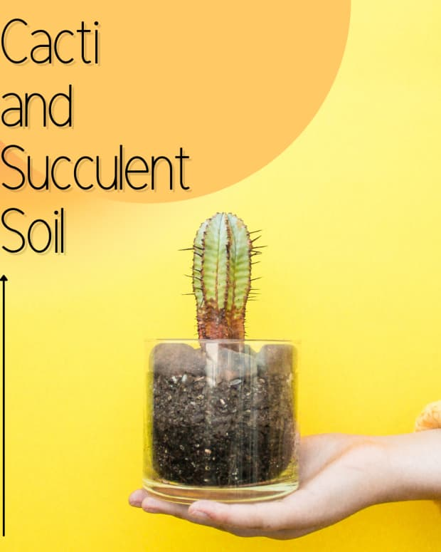 how-cacti-and-succulent-soil-is-different-from-ordinary-potting-soil