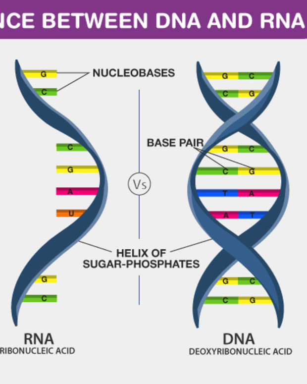 dna-and-rna-details