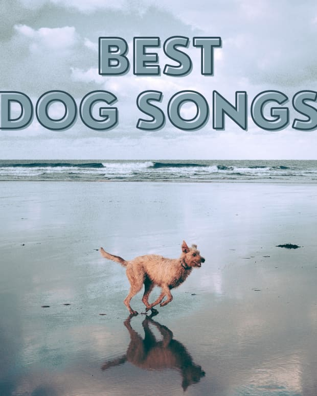 best-songs-about-dogs