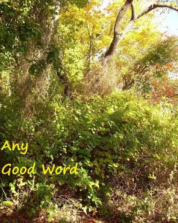 any-good-word