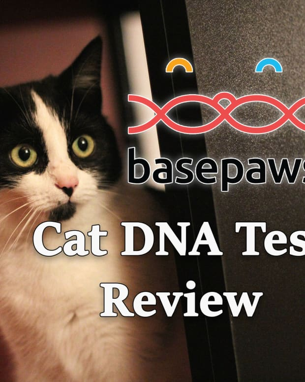 basepaws-cat-dna-test-review